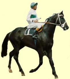 Centruy o Australian racehorse