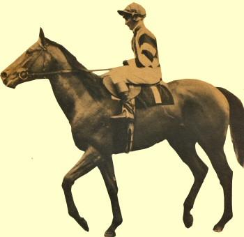Cobbermine racehorse SAJC Guineas winner