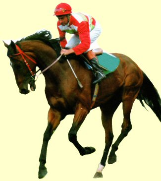 Cossack Prince racehorse