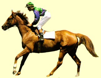 Gold Cricle racehorse