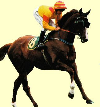 Golden Sword - racehorse - Doncaster Handicap winner