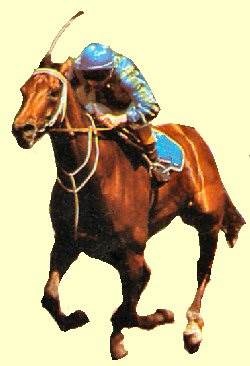 Just A Dash - Melbourne Cup Winner 1981