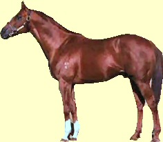 Kingston Rule racehorse