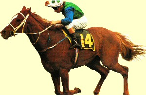 Marooned racehorse