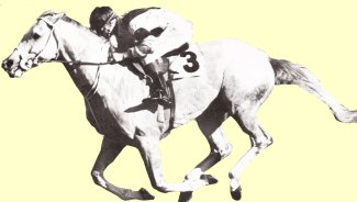 Martello Towers - racehorse