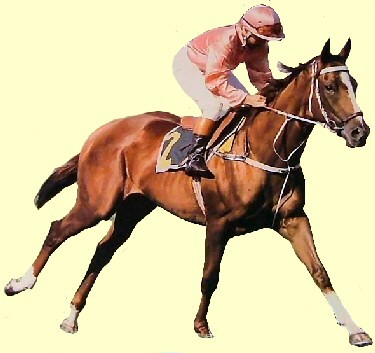 Mighty Kingdom racehorse