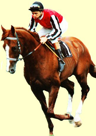 Sovereign Red racehorse