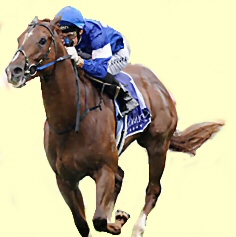 Star Witness - racehorse - Blue Diamond Stakes winner