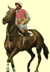Swell Time racehorse