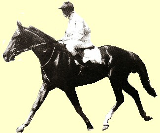 Time And Tide racehorse