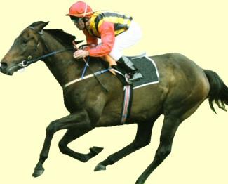 El Segundo racehorse Australian