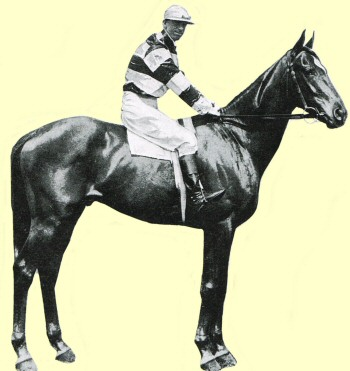 Murmur - racehorse - Caulfield Cup winner 1904