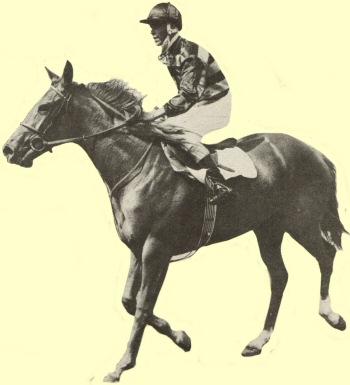 Port Joy racehorse