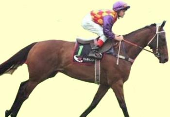 Royal Caliph - racehorse -Ballarat Cup winner
